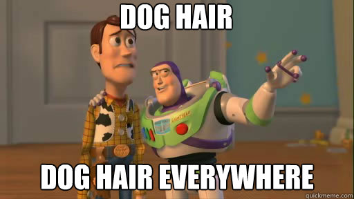 dog hair dog hair everywhere - Everywhere