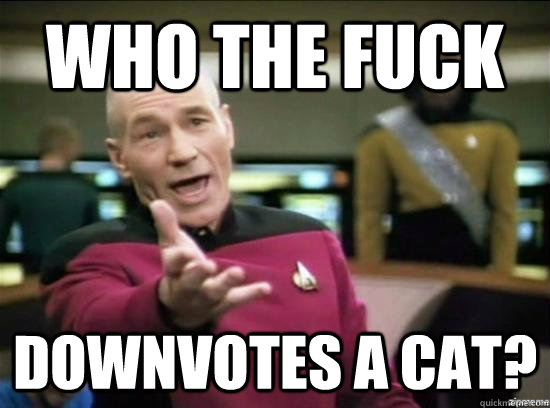 who the fuck downvotes a cat - Annoyed Picard HD