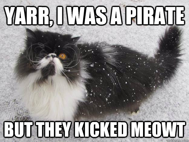 yarr i was a pirate but they kicked meowt - pirate cat