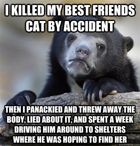 i killed my best friends cat by accident then i panackied an - Confession Bear