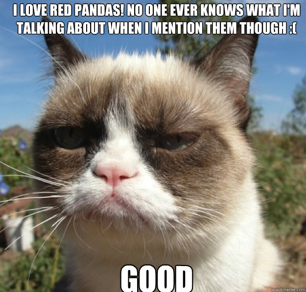 i love red pandas no one ever knows what im talking about  - grumpy cat