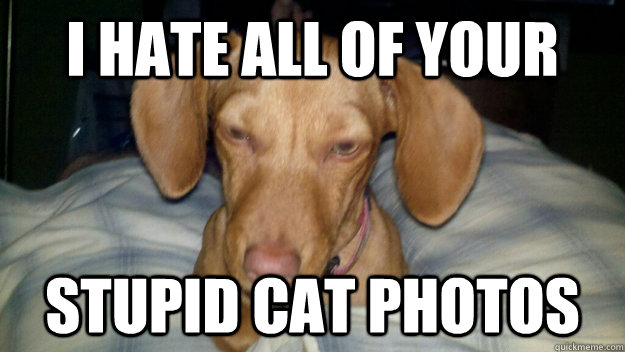 i hate all of your stupid cat photos -