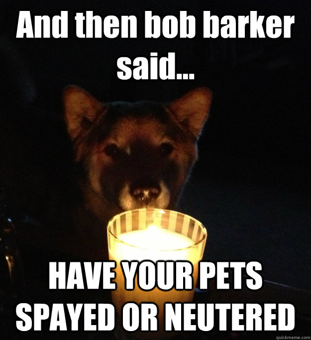 and then bob barker said have your pets spayed or neutere - Scary Story Dog