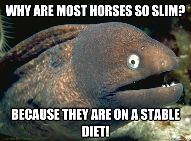 why are most horses so slim because they are on a stable di - Bad Joke Eel
