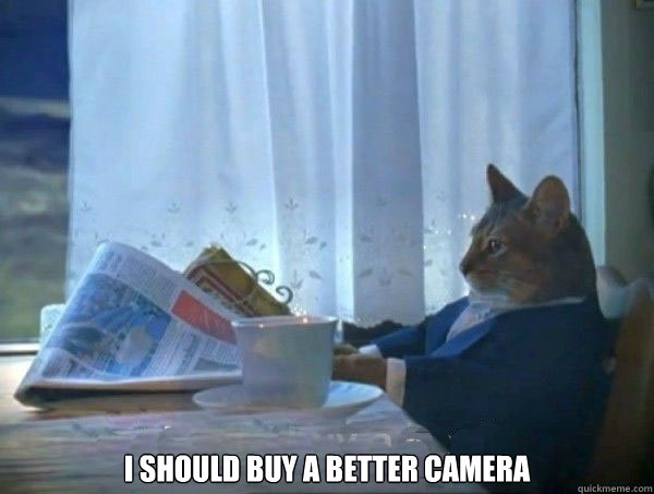 i should buy a better camera - morning realization newspaper cat meme
