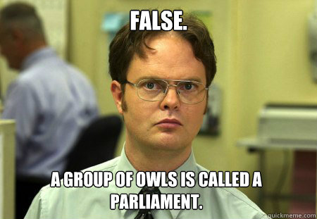 false a group of owls is called a parliament - Dwight
