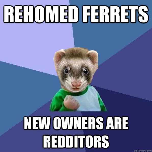 rehomed ferrets new owners are redditors -