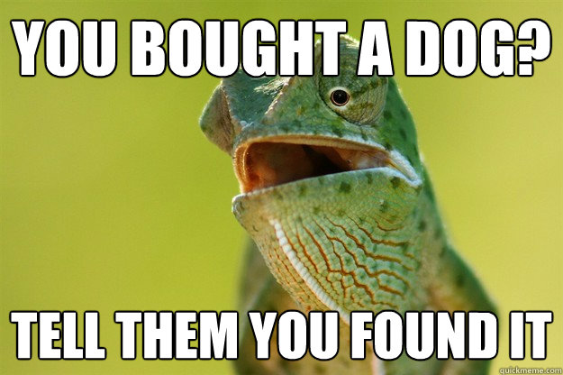 you bought a dog tell them you found it - Karma Karma Karma Karma Karma Cameleon