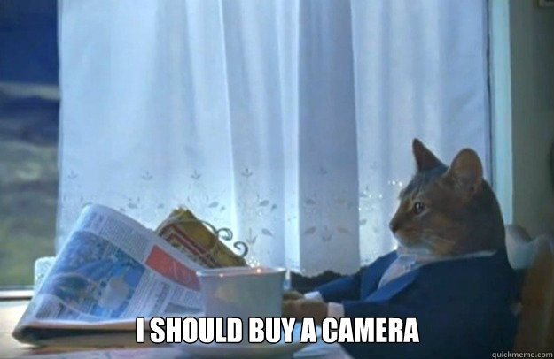 i should buy a camera - Sophisticated Cat