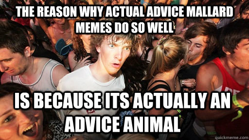 the reason why actual advice mallard memes do so well is bec - Sudden Clarity Clarence