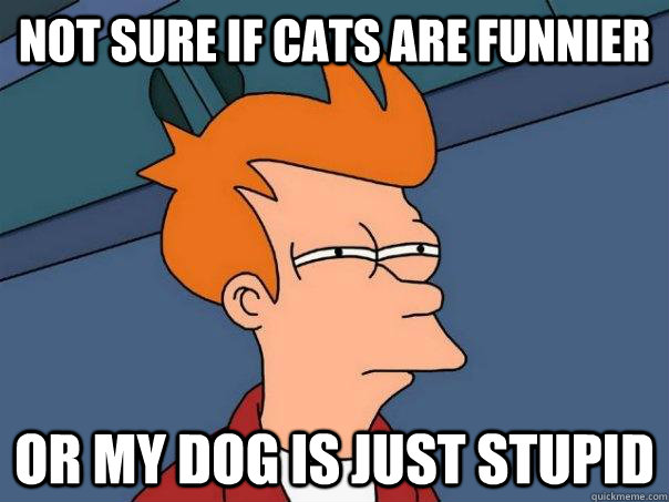 not sure if cats are funnier or my dog is just stupid - Futurama Fry