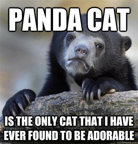 panda cat is the only cat that i have ever found to be adora - Confession Bear