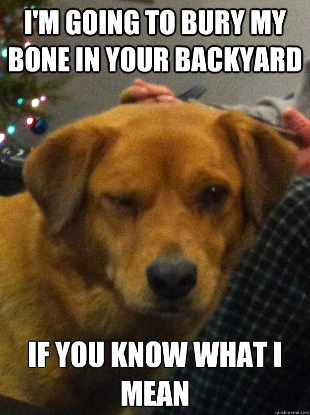 im going to bury my bone in your backyard if you know what  - Innuendo dog