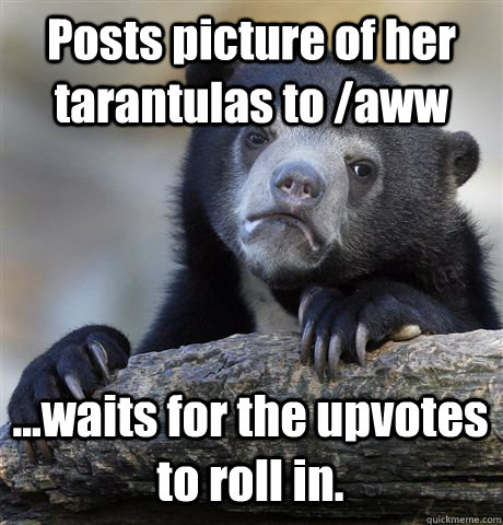 posts picture of her tarantulas to aww waits for the upv - Confession Bear