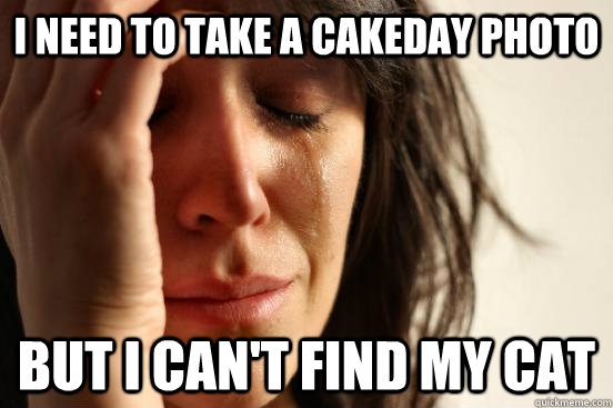 i need to take a cakeday photo but i cant find my cat - First World Problems