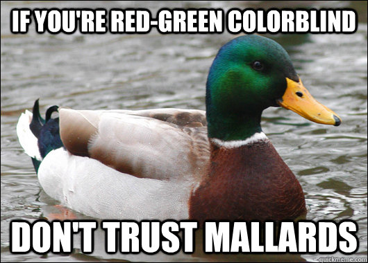 if youre redgreen colorblind dont trust mallards - Actual Advice Mallard