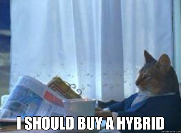i should buy a hybrid  - I should buy a boat cat