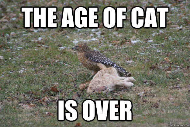 the age of cat is over -