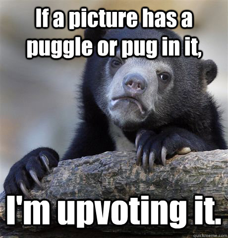 if a picture has a puggle or pug in it im upvoting it - Confession Bear