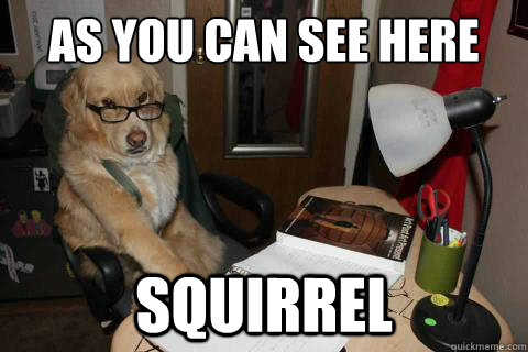 as you can see here squirrel - Financial Advice Dog