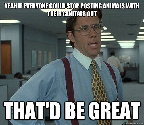 yeah if everyone could stop posting animals with their genit - Lomberg
