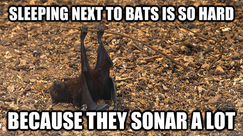 sleeping next to bats is so hard because they sonar a lot -