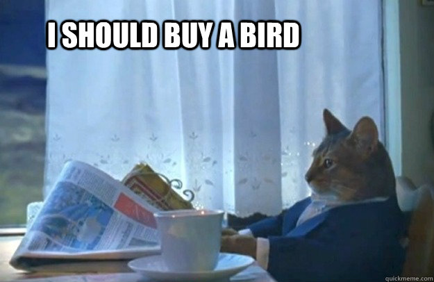 i should buy a bird - Sophisticated Cat