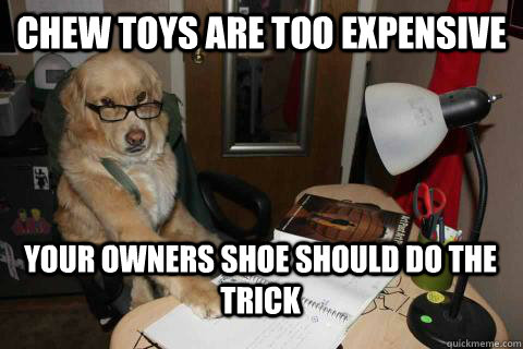 chew toys are too expensive your owners shoe should do the t - Financial Advice Dog