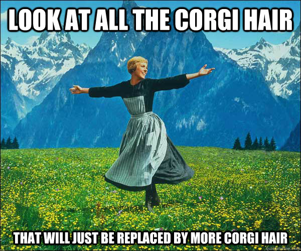 look at all the corgi hair that will just be replaced by mor - Sound of Music