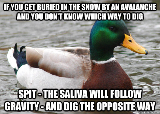 if you get buried in the snow by an avalanche and you dont  - Actual Advice Mallard