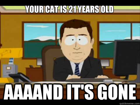 your cat is 21 years old aaaand its gone - and its gone