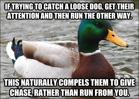 if trying to catch a loose dog get their attention and then - Actual Advice Mallard