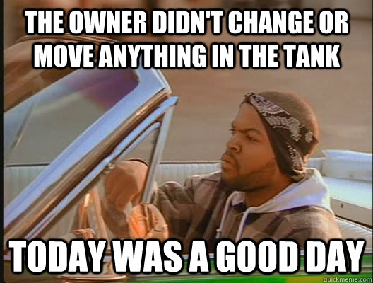 the owner didnt change or move anything in the tank today w - today was a good day