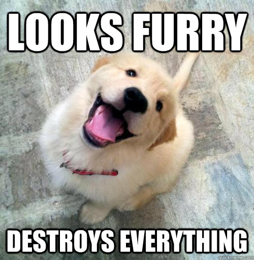 looks furry destroys everything - Actual Puppy