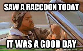 saw a raccoon today it was a good day - A good day