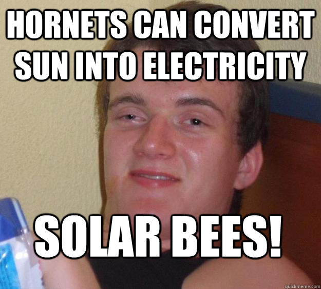 hornets can convert sun into electricity solar bees - 10 Guy
