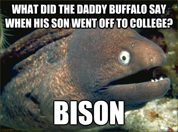 what did the daddy buffalo say when his son went off to coll - Bad Joke Eel