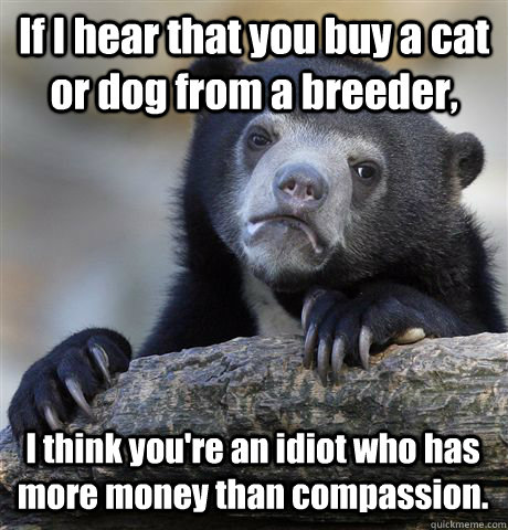 if i hear that you buy a cat or dog from a breeder i think  - Confession Bear