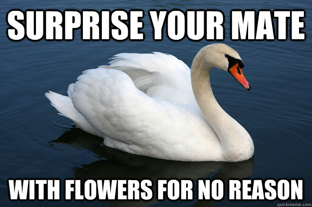 surprise your mate with flowers for no reason - Relationship Advice Swan