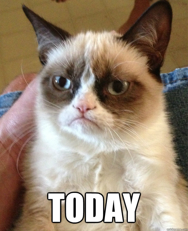 today - Grumpy cat