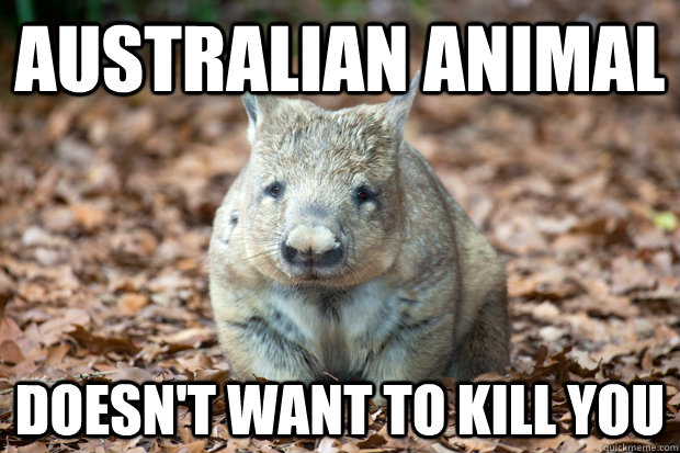 australian animal doesnt want to kill you - 