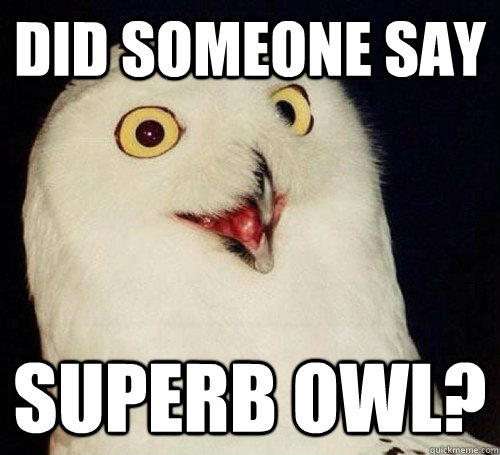 did someone say superb owl - Superb Owl