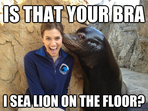is that your bra i sea lion on the floor - Crazy Secret