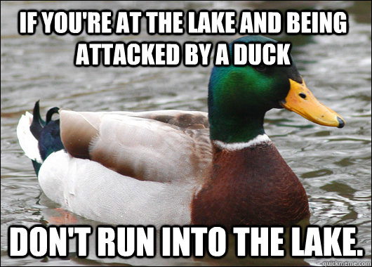 if youre at the lake and being attacked by a duck dont run - Actual Advice Mallard