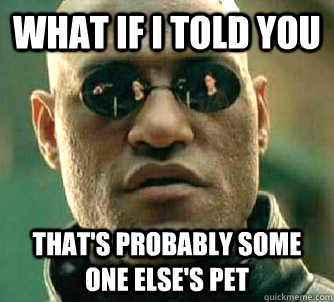 what if i told you thats probably some one elses pet - What if I told you