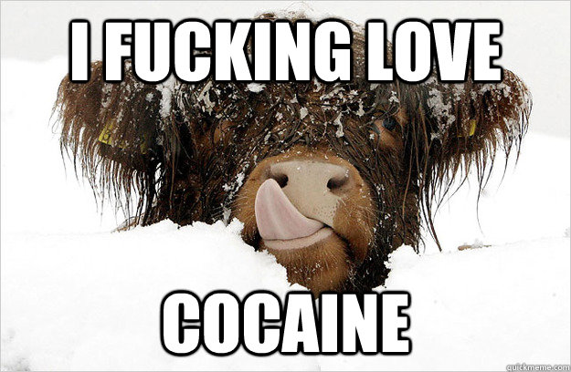 i fucking love cocaine - nom nom cow