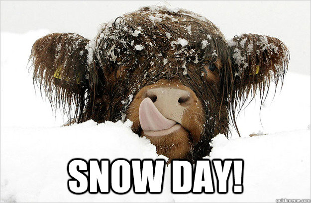 snow day - SNOWCOW