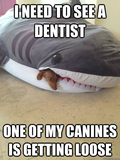 i need to see a dentist one of my canines is getting loose -