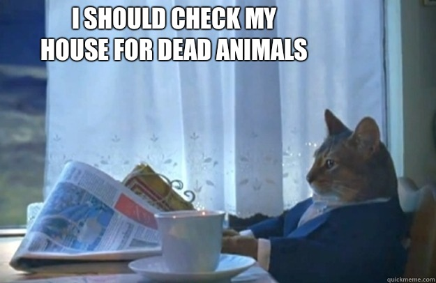 I should check my house for dead animals - Sophisticated Cat