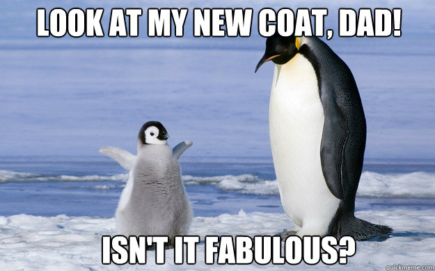 look at my new coat dad isnt it fabulous - Coming Out Penguin
